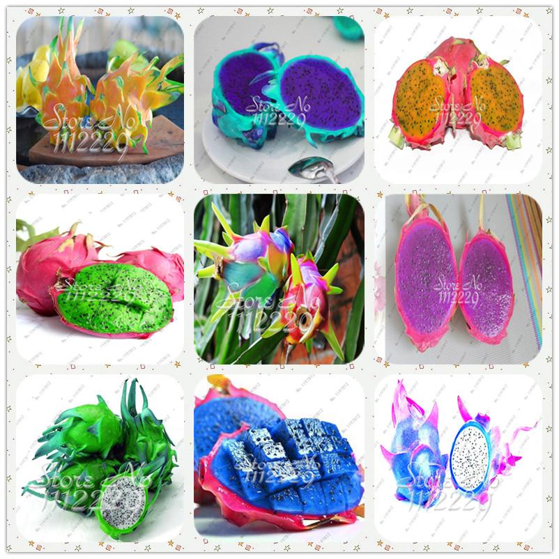 Pitaya clipart chinese dragon China fruit Fruit Sweet Pitaya