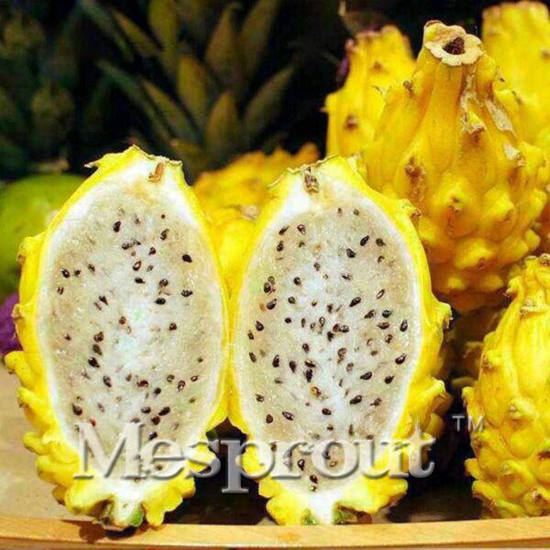Pitaya clipart chinese dragon Dragon Online Seeds 100PCS Plants