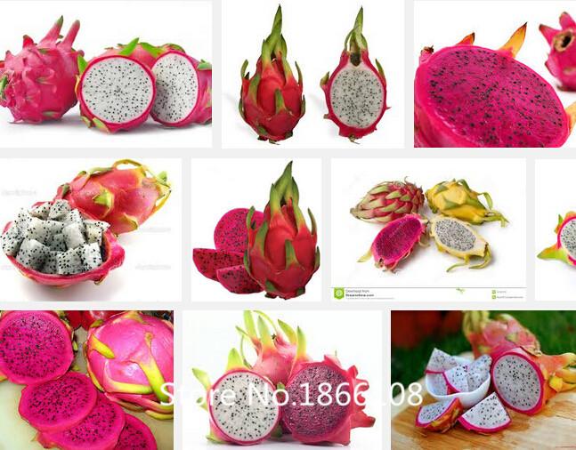 Pitaya clipart chinese dragon Cheap dragon Cactus Buy lots