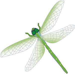 Pitaya clipart dragonfly Art Libellule Clip Download Dragon