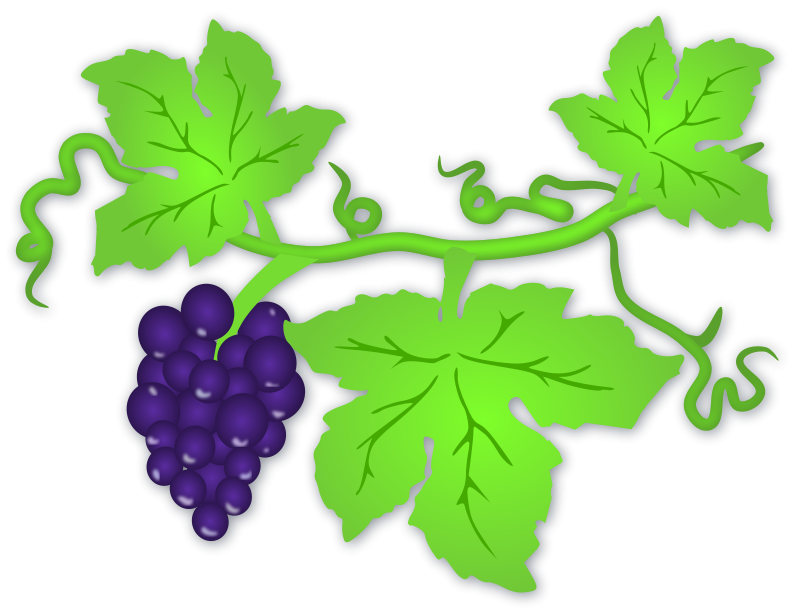 Vineyard clipart english Grapes Fruit Clip Download Art