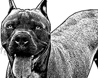 Pitbull clipart bad boy Animals clipart bull images digi