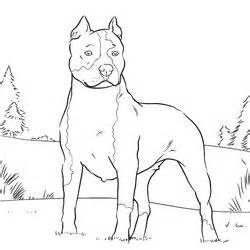 Pitbull clipart coloring page Coloring Pages Dog dog Page