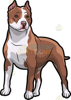 Pitbull clipart pittbull Cartoon Cartoon Pit Bull and