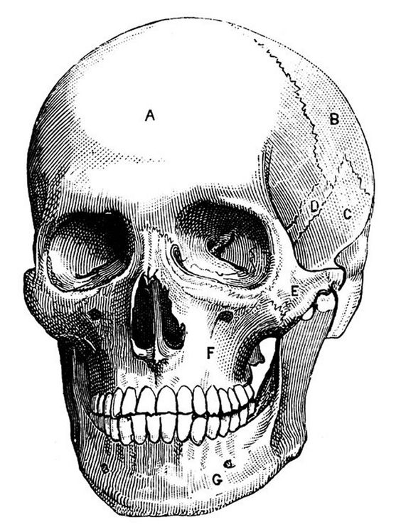 Pixel clipart skeleton head The bones gallery central jpg