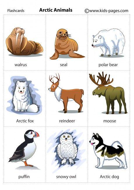 Arctic clipart adaptation 112 best Activities: animal Pinterest