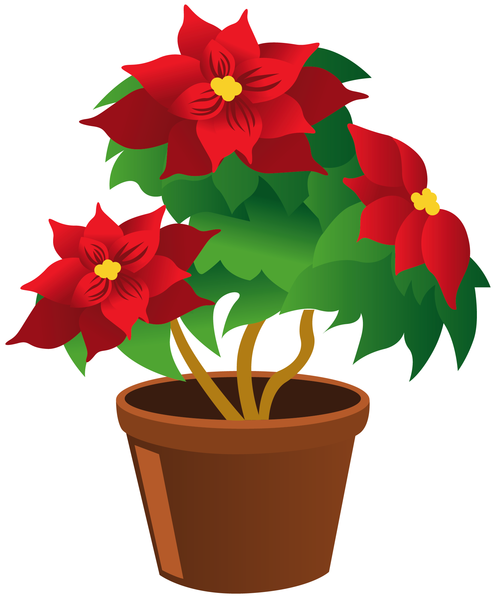 Poinsettia clipart cartoon Clip Potted kid plant Growing
