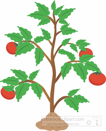 Plant clipart Clipart Graphics Pepper Size: Pictures