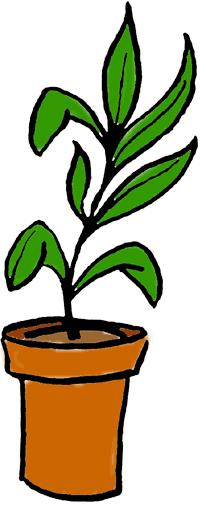 Plant clipart Images Plants Free clipart Clipart