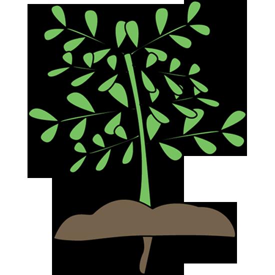 Plant clipart Paint Cliparting art Plant 2