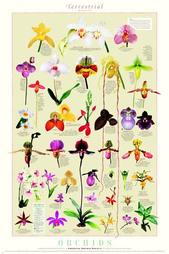 Plant clipart different kind plant Orchids The on Types Best