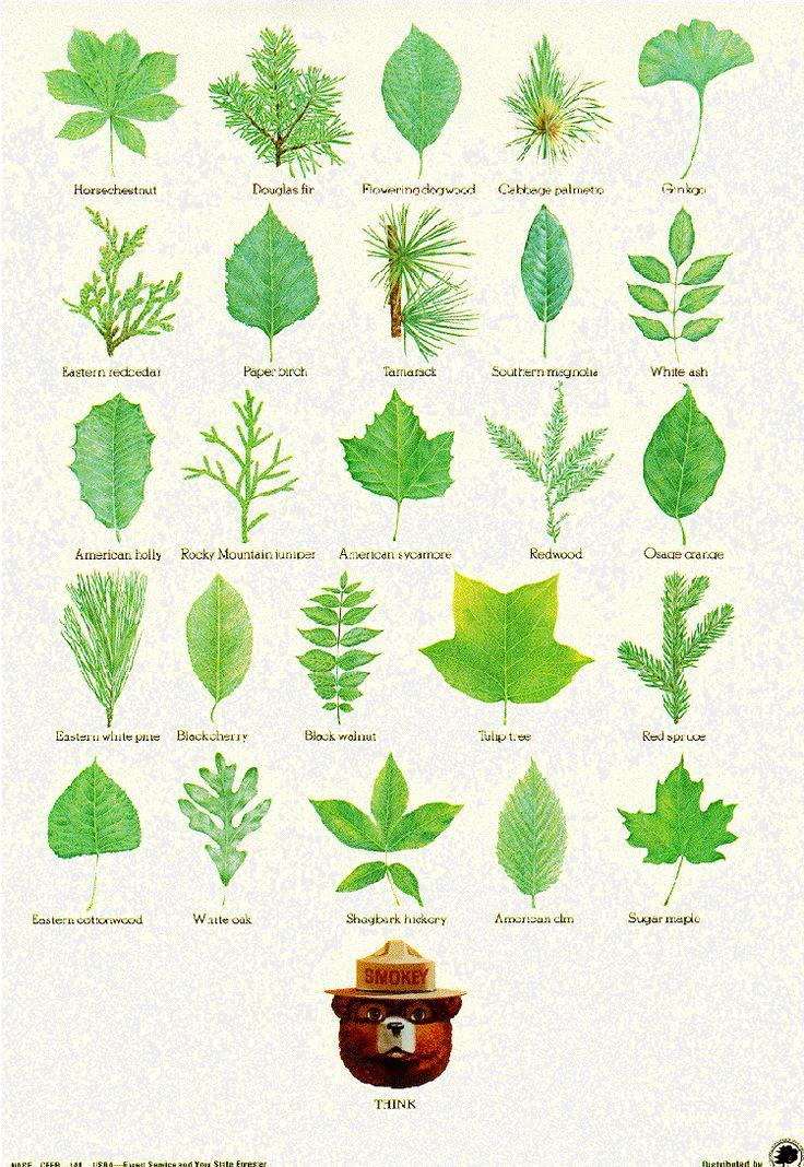 Plant clipart different kind plant 25+ Pinterest picture Service Plant