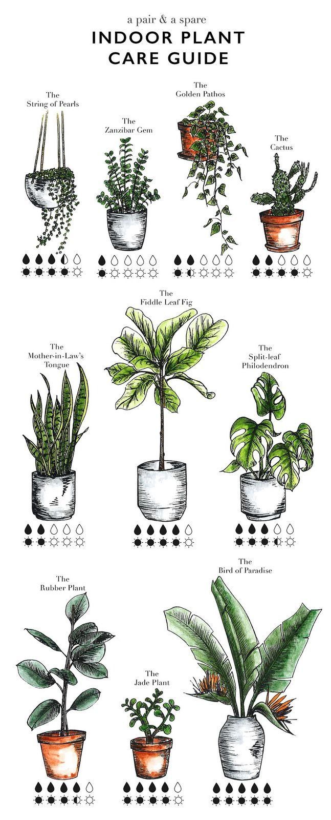 Plant clipart different kind plant 25+ on Water Indoor garden
