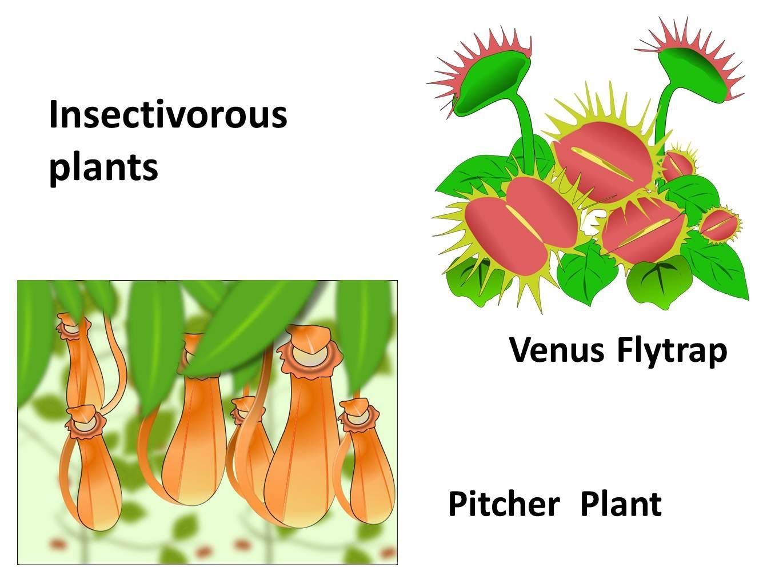 Plant clipart different kind plant In plants plants Nutrition Science
