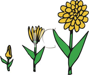 Plant clipart growing stage Growing Clipart Free growing%20plant%20clipart Plant