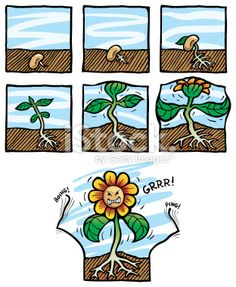 Plant clipart growing stage Growing Google recommended  vs