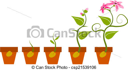 Plant clipart growth Growth of Vector of plant