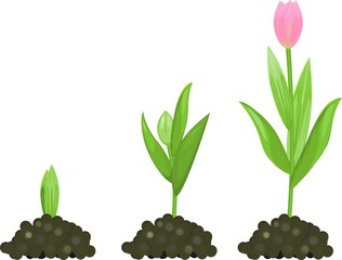 Plant clipart growth Stage Search stage