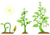 Plant clipart growth Plant Growth Clipart Info Panda