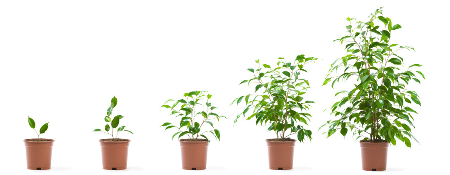 Plant clipart growth Last a that Seedlings Academy