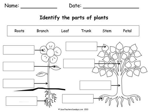 Plant clipart labels its part A lesson & Parts Resources