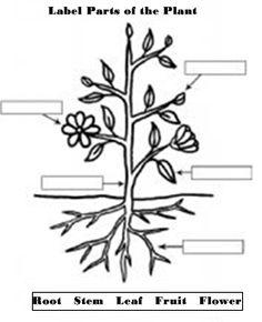 Plant clipart labels its part Worksheet plant Google worksheet of
