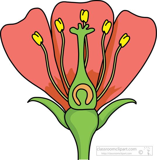 Plant clipart labels its part Stigma Search petals sepal petals