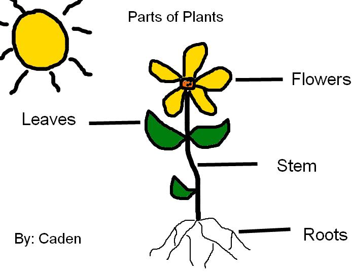 Plant clipart labels its part 521: EDU Teach Plants a