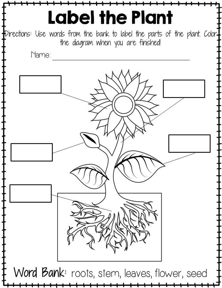 Plant clipart labels its part Your of Teach 20+ with