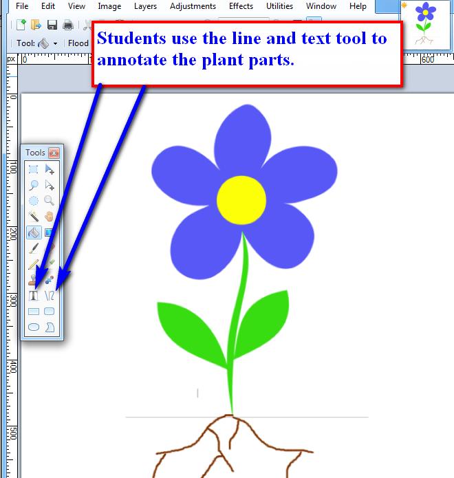 Plant clipart labels its part Stems Flowers Computer parts Roots