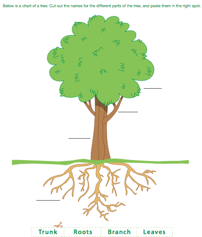 Plant clipart living thing LESSON Grade Activity of 1)