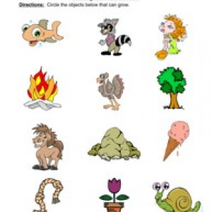 Plant clipart living thing Have Things Identify That Teaching