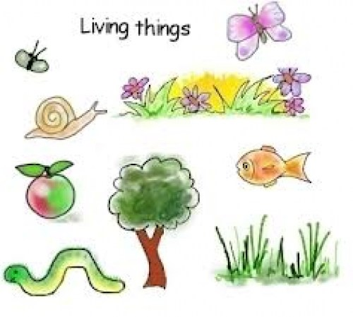 Plant clipart living thing Things Passnownow Classwork – Series