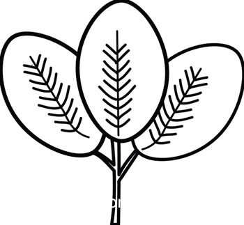 Plant clipart outline White And Plant compound%20clipart Clipart