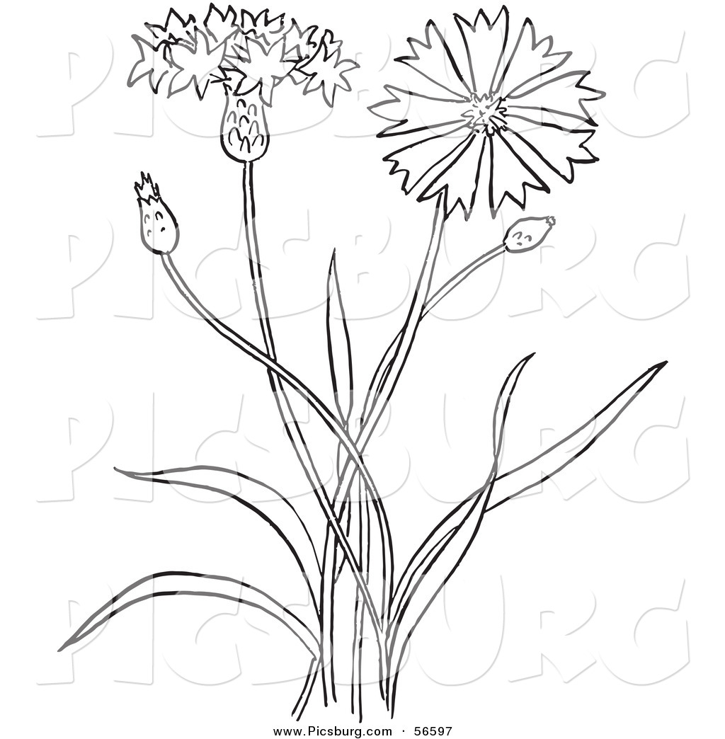 Plant clipart outline Page Bachelors of Coloring Art