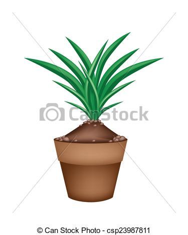 Plant clipart pandan Ceramic Pandan csp23987811 Fresh of