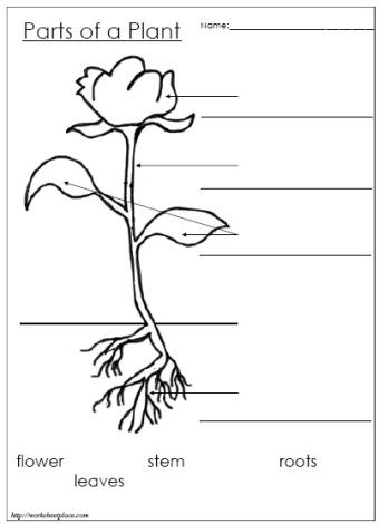 Plant clipart part Site more (also the on