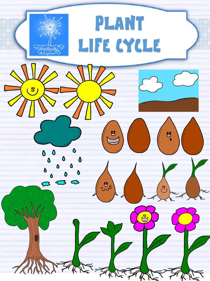 Plant clipart plant life Plant Life cycle clipart life