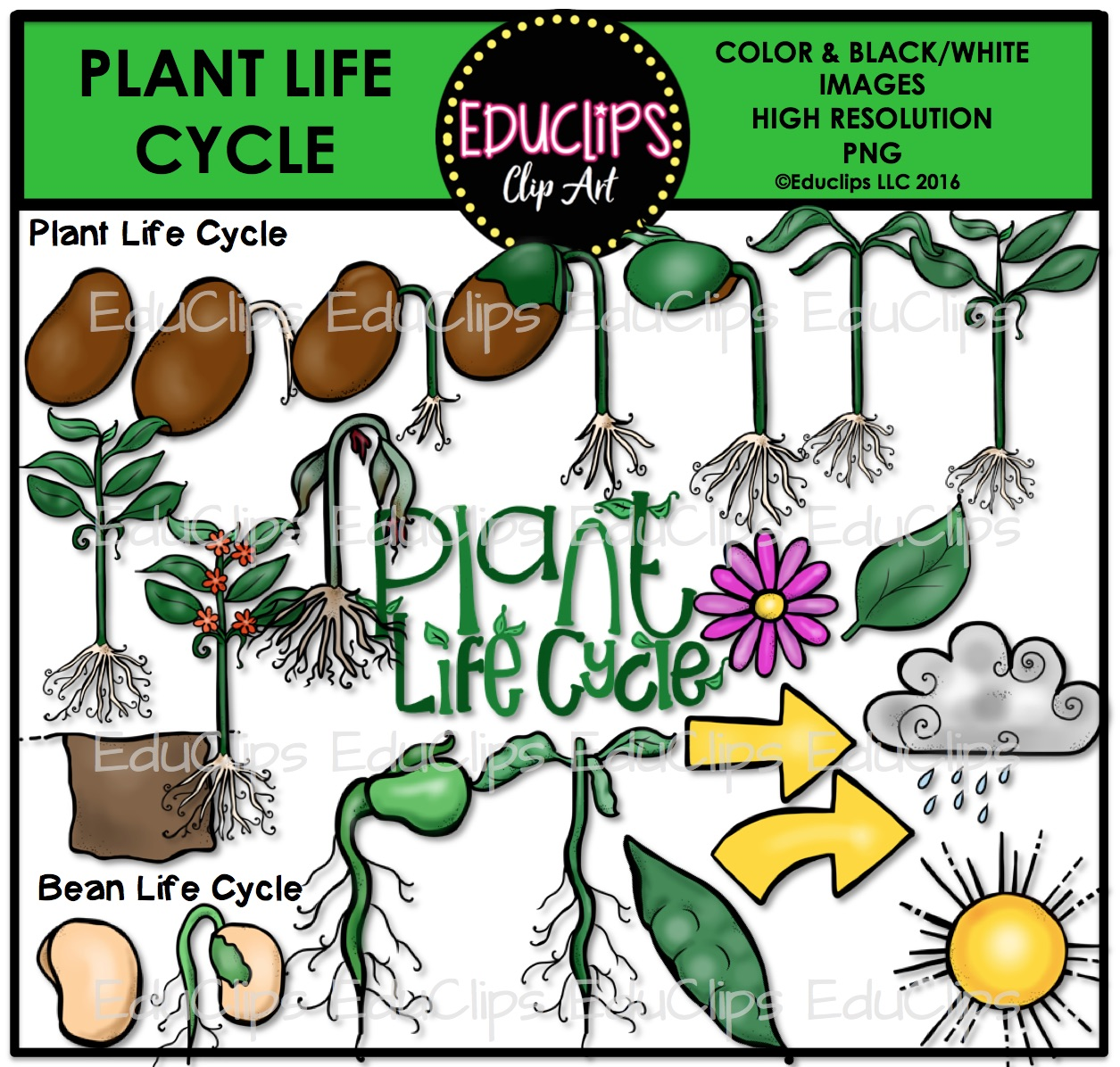 Plant clipart plant life To Plant and Life Cycle