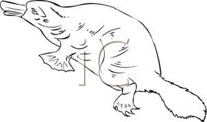 Platypus clipart black and white Clipart Profile Picture Free Platypus