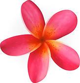 Plumeria clipart Plumeria Plumeria design pink Plumeria