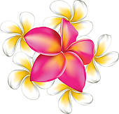 Plumeria clipart Free Natural Flower Background flowers