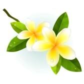 Plumeria clipart  Free Plumeria Flower Clipart