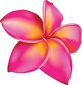Plumeria clipart Clip Pink isolated Plumeria ·