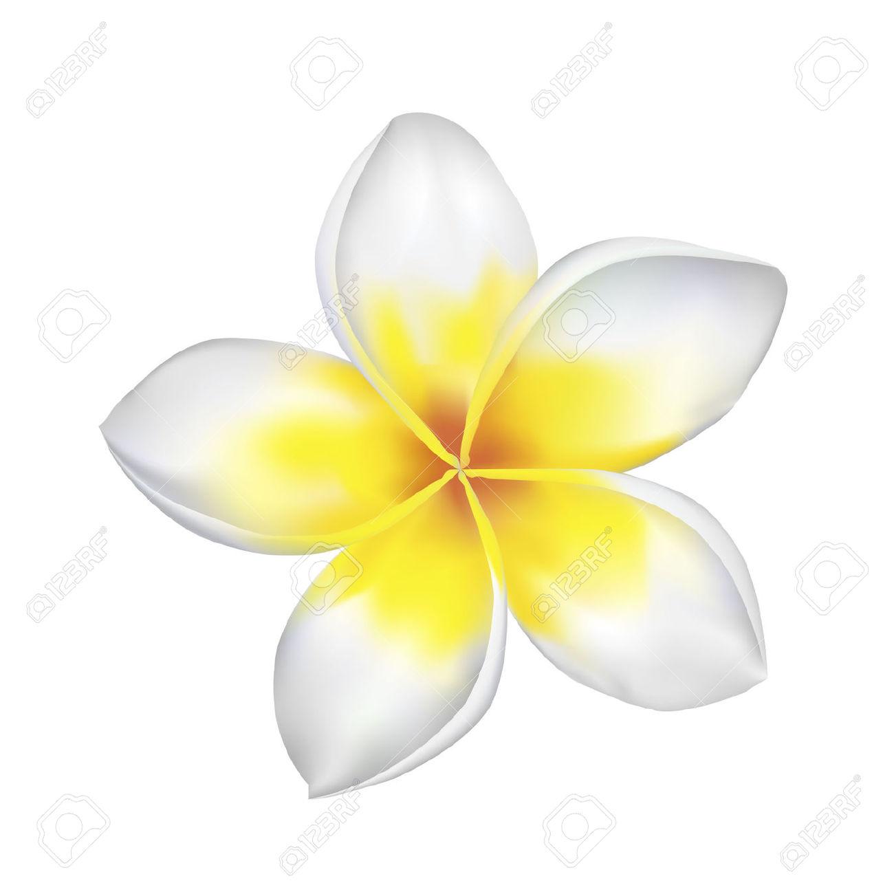 Yellow clipart plumeria Plumeria Clipart Clip Clipart Plumeria