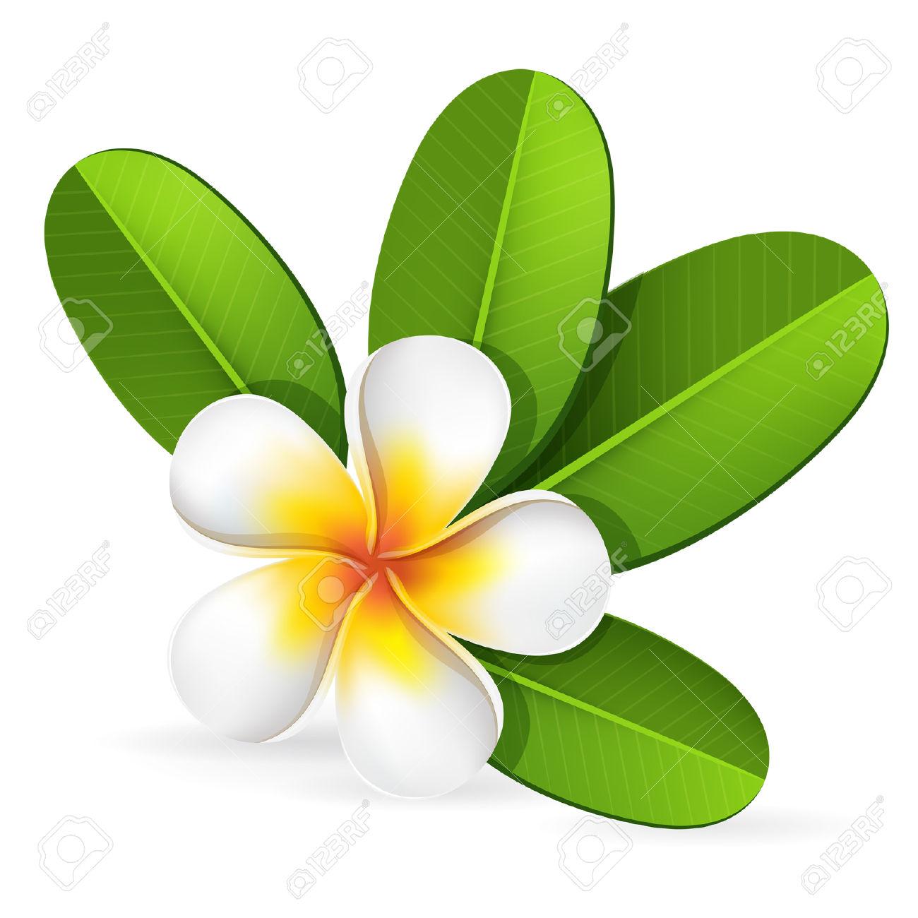 Plumeria clipart spa Tropical Plumeria Summer Leaves Green