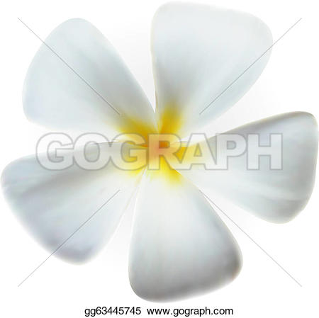 Plumeria clipart spa Isolated Flower Frangipani Stock Vector