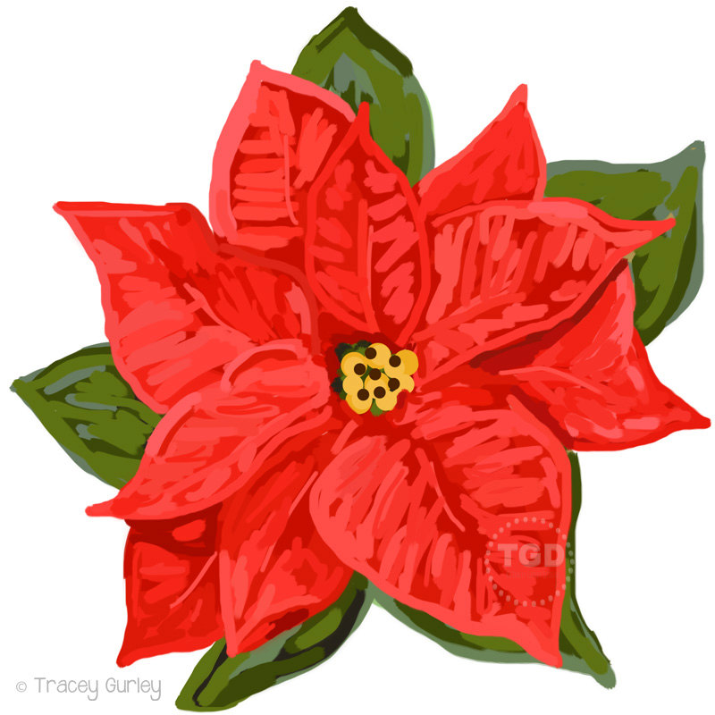 Poinsettia clipart Red  Clip holiday clipart