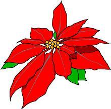 Poinsettia clipart Poinsettia red Christmas Poinsettia Free