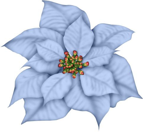 Poinsettia clipart blue 2 frosty Gif's Page days